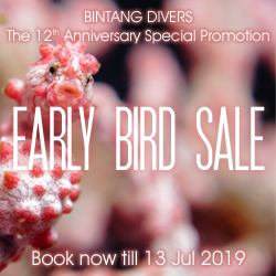 The 12th Anniversary Early Bird Sale